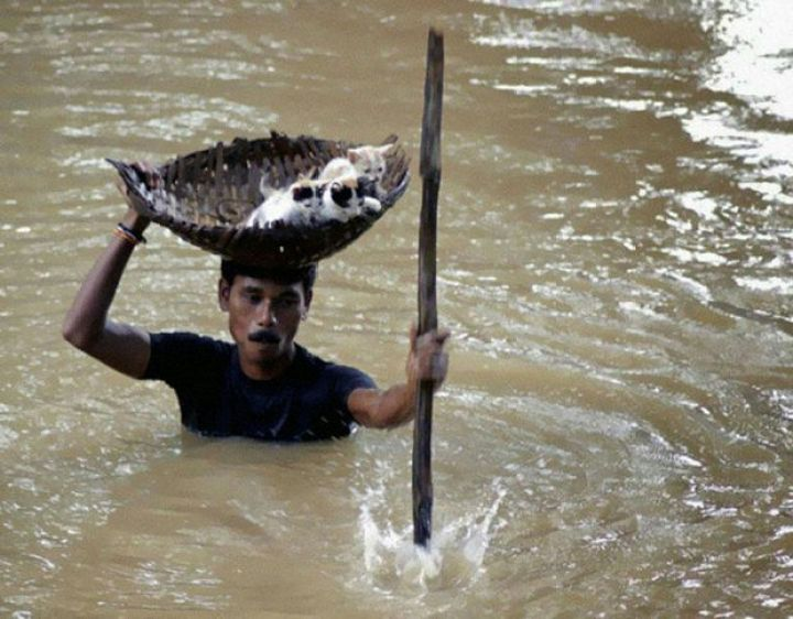 29 Powerful Pictures - In 2011, this villager saved several stray cats by carrying them in a basket balanced on his head during massive floods in Cuttack City, India.