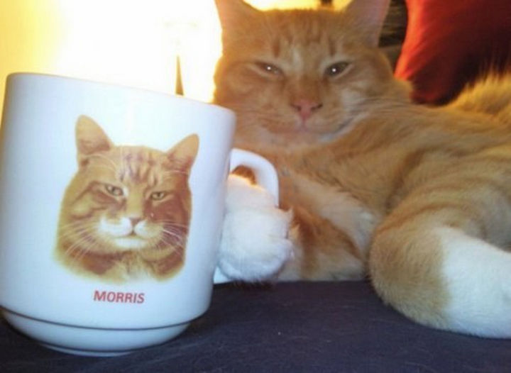 """30 Funny Cat Pictures - """"I've got my own mug, see!"""""""