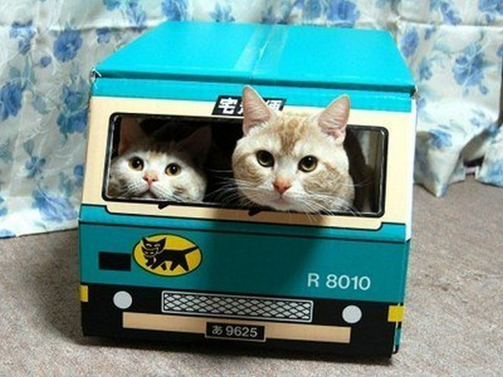 """30 Funny Cat Pictures - """"Slow down! You're going to kill us both."""""""