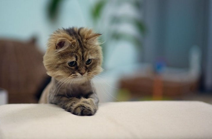 """30 Funny Cat Pictures - """"It's time to pray."""""""