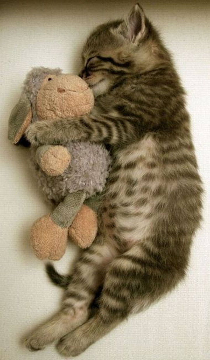 """30 Funny Cat Pictures - """"Let's cuddle, you little munchkin."""""""