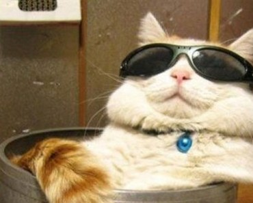 30 Cats That Prove Being Silly Is Their Job.