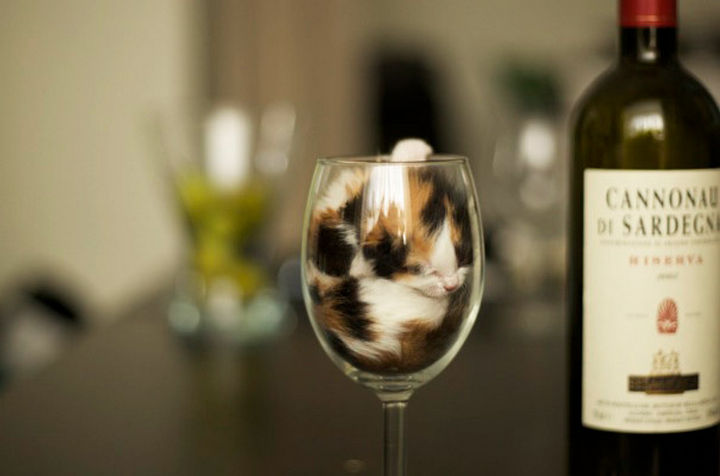 24 Cats Asleep in a State of Bliss - That is the cutest wine glass I've ever seen.