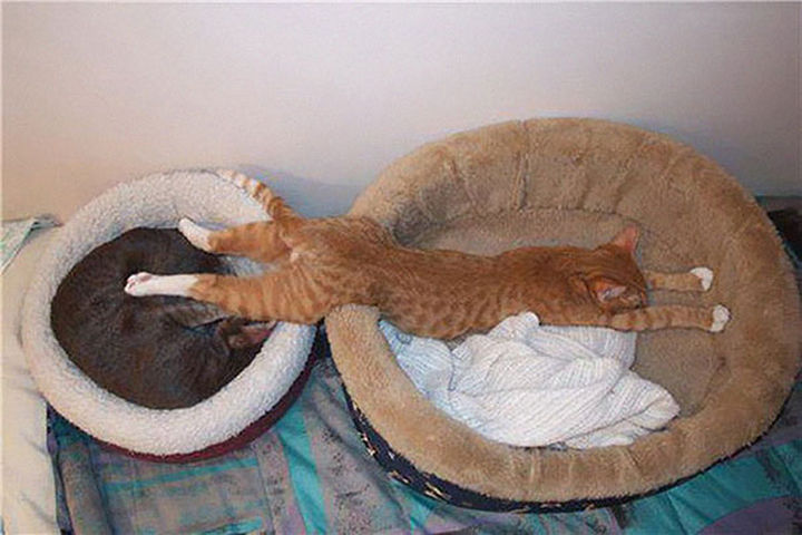 24 Cats Asleep in a State of Bliss - When one bed just won't do.
