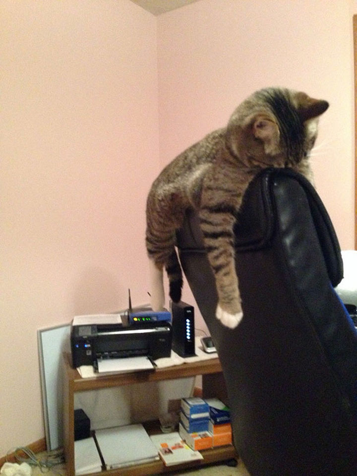 24 Cats Asleep in a State of Bliss - This cat is bringing planking back.