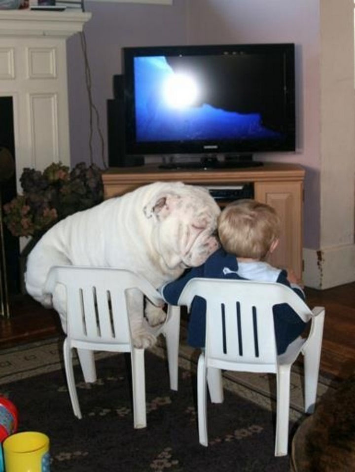 15 Things Only Bulldog Owners Will Understand - Some Bulldogs do get big but that just means there will more of them to cuddle with.