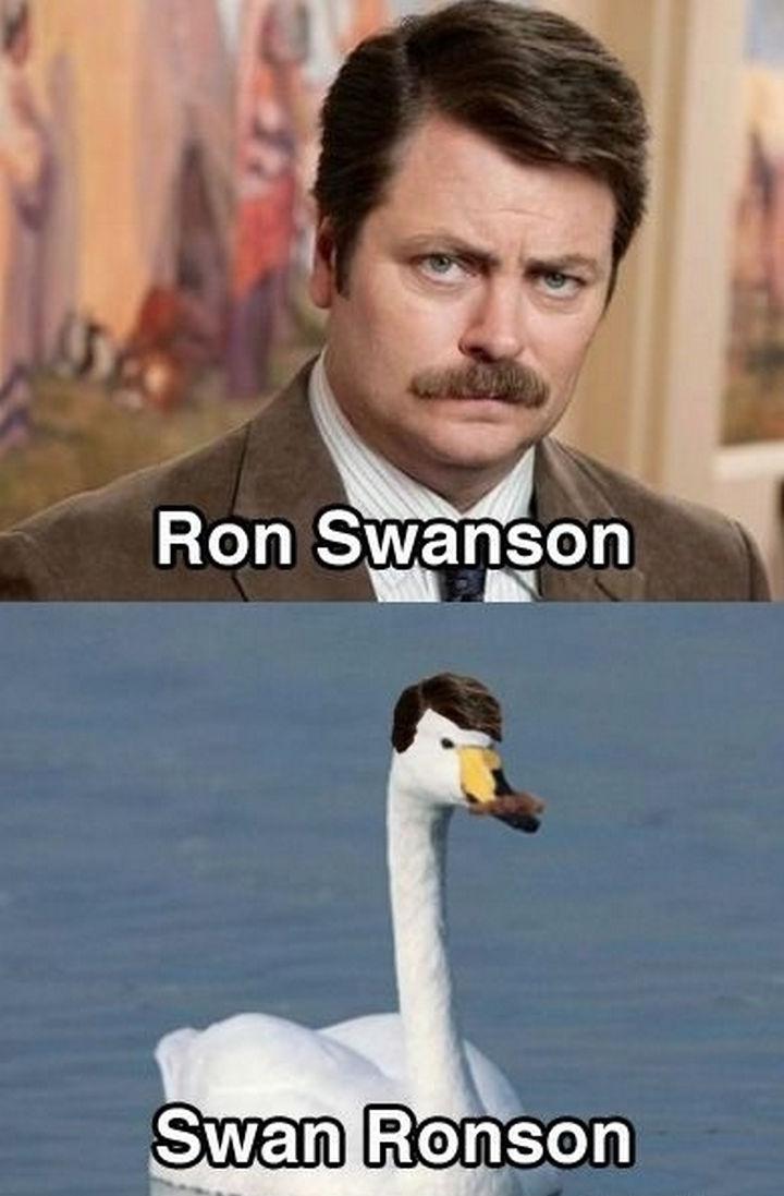 55 Hilariously Funny Celebrity Name Puns - Ron Swanson.