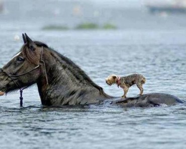 20 Beautiful Images Showing an Animal's Unconditional Love.