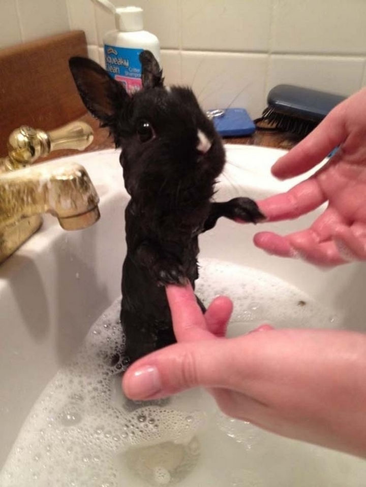 29 Tiny Baby Animals - Lovable bunny having bathtime!