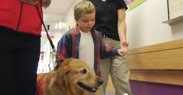 Golden Retriever Helps Young Boy with Traumatic Brain Injury TBI.