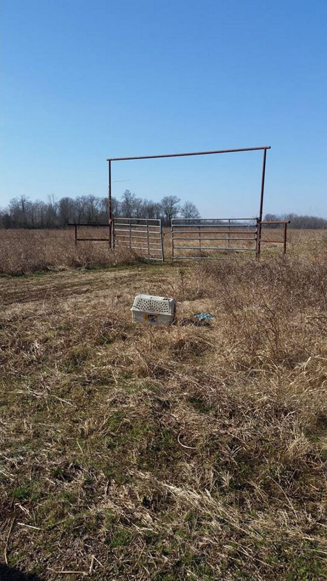 Bret Winingar and his son Zachwere riding along and they noticed a pet crate abandoned in a field.