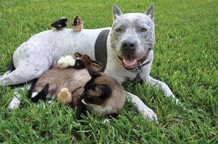 Reasons You Shouldn't Own a Pit Bull - The other pets in the neighborhood will be afraid of them.