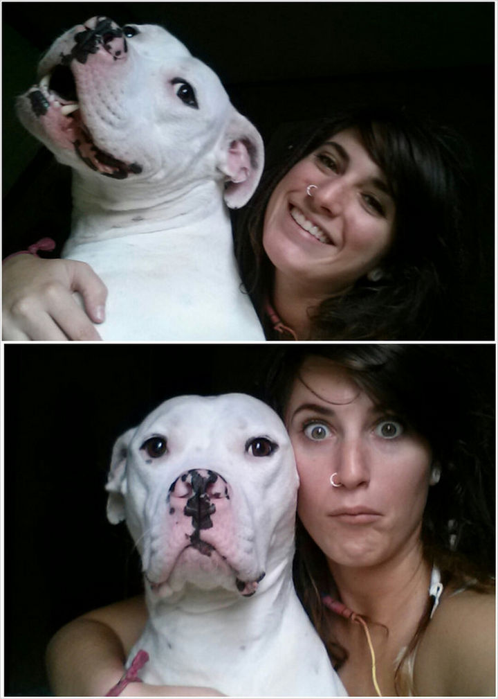 Reasons You Shouldn't Own a Pit Bull - They're always serious.