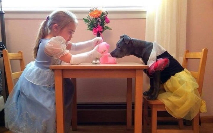 Reasons You Shouldn't Own a Pit Bull - Your children won't invite you to tea parties anymore.