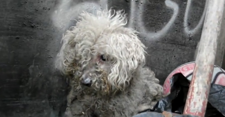 Blind Dog Rescue of Fiona. What Happened After Is a Miracle!