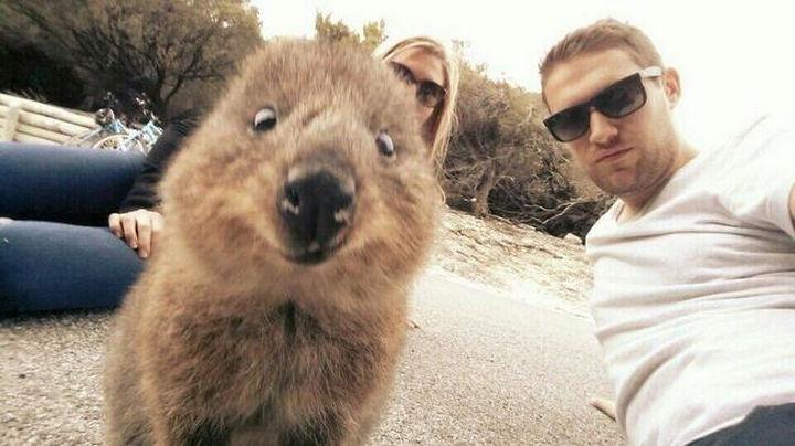 Quokka Selfie Trend - Image 6.