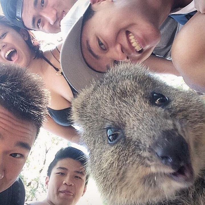 Quokka Selfie Trend - Image 8.