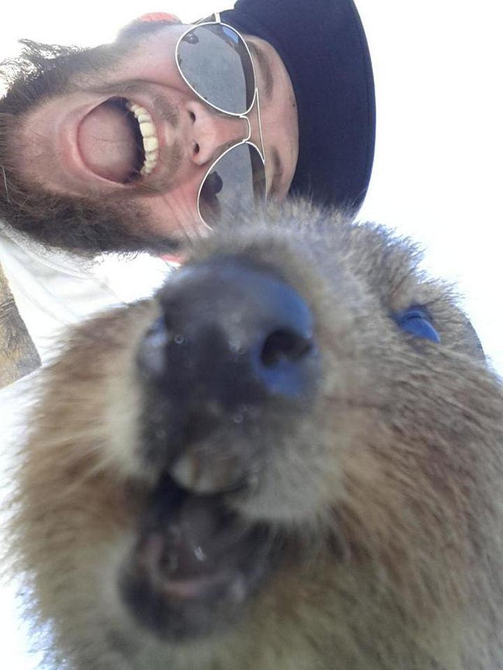 Quokka Selfie Trend - Image 22.