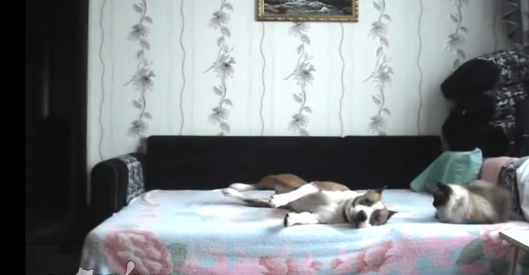 Dog Stays Home Alone and Gets Caught on Hidden Camera.