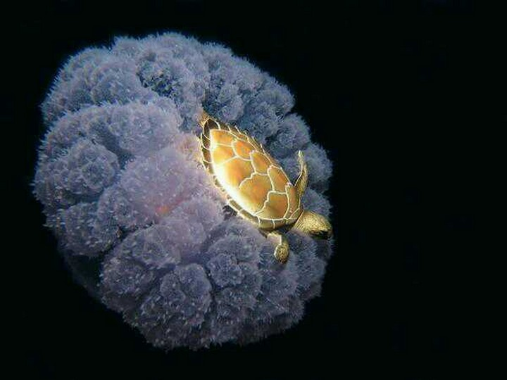 21 Awe-Inspiring Photos - A sea turtle hitching a ride on a jellyfish.