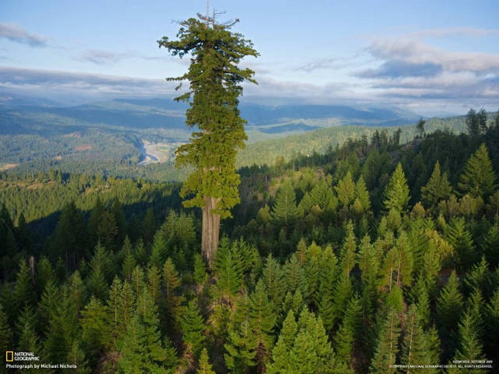 21 Awe-Inspiring Photos - Hyperion, the tallest tree in the world is over 380 feet tall and expected to be 700-800 years old.