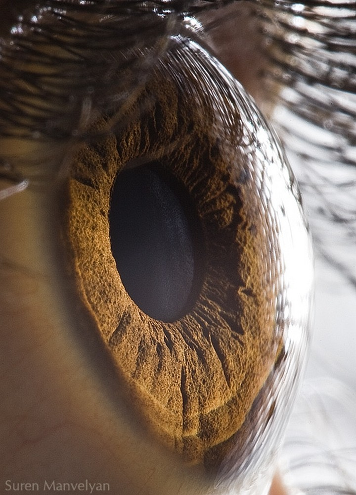 21 Awe-Inspiring Photos - A breathtaking closeup of the human eye.