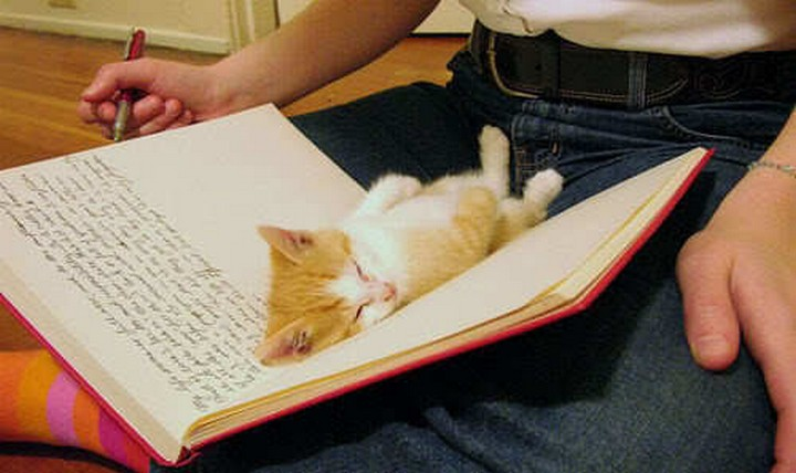 24 MORE Cats Asleep in a State of Bliss - All this homework is making him sleepy.