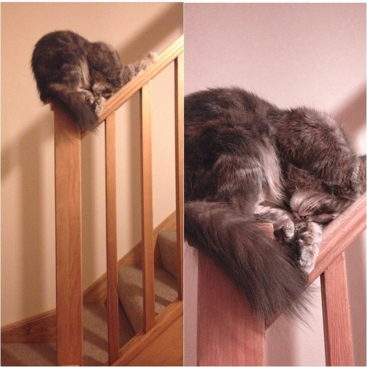 24 MORE Cats Asleep in a State of Bliss - Balance is everything.