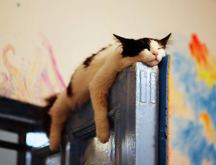 24 MORE Cats Asleep in a State of Bliss - I only hope nobody needs to close the door.