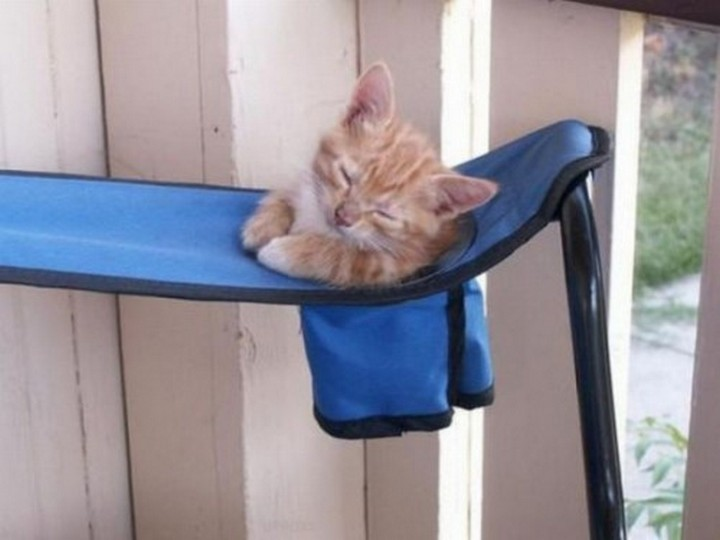 24 MORE Cats Asleep in a State of Bliss - I wish my cup holders had adorable kittens in them too!