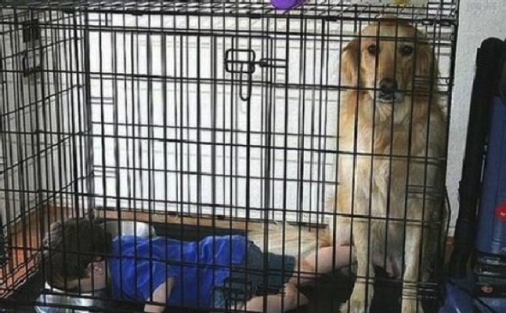 34 Parenting Fails - The dog is NOT happy.