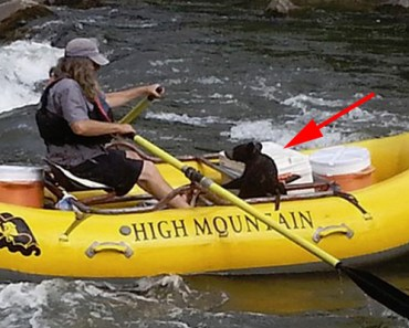 Baby Bear Rescued by Rafting Guide on Nolichucky River.