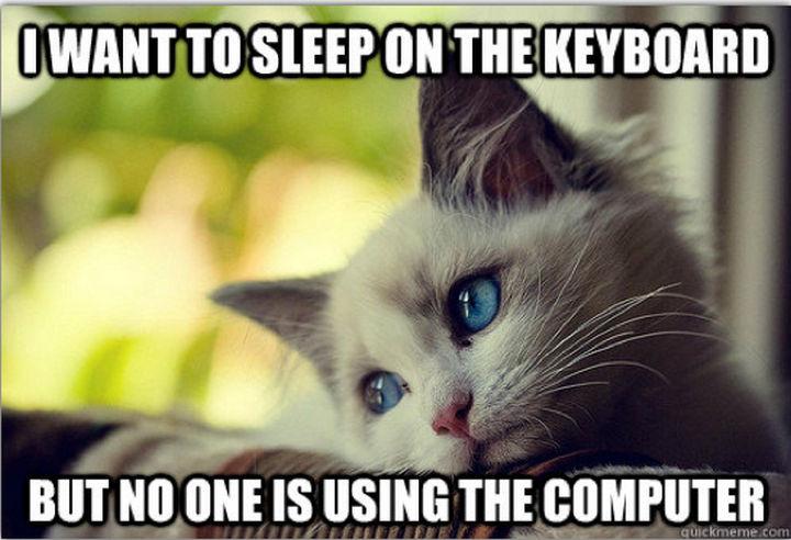 21 Cat Logic Photos - Clever girl.