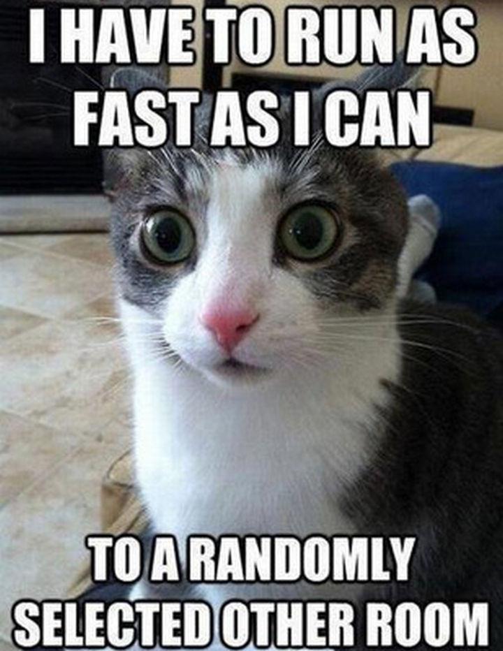 21 Cat Logic Photos - This cat needs less caffeine.
