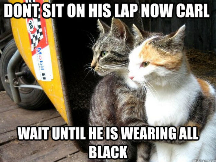 21 Cat Logic Photos - Just like clockwork.