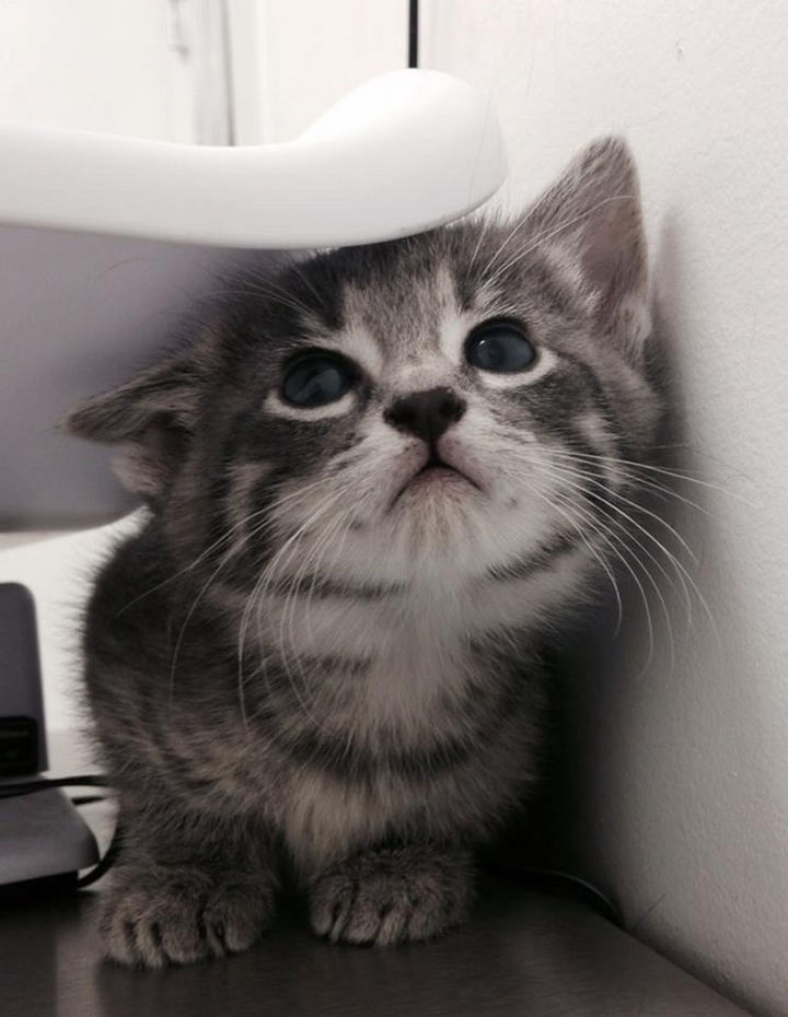 """28 Animals Going to the Vet - """"This is my first time here and I don't like this place!"""""""