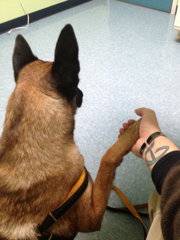 """28 Animals Going to the Vet - """"Whatever you do, don't let go"""""""