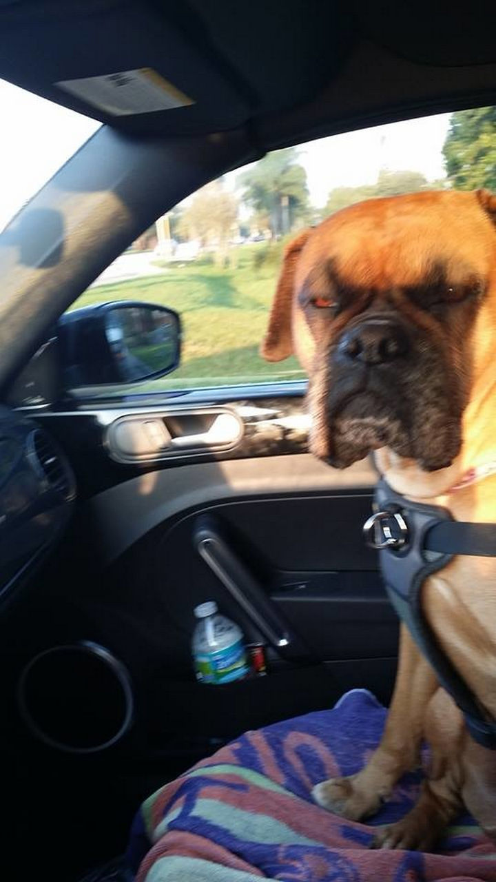 """28 Animals Going to the Vet - """"If I were you, I would turn this car around right now!"""""""