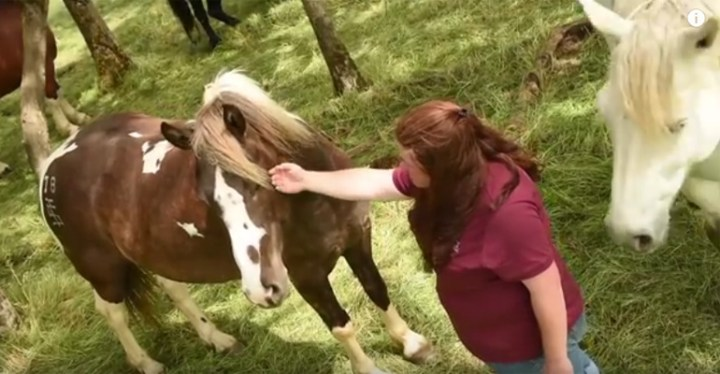Duchess Sanctuary Is an Oasis for Abandoned Horses.