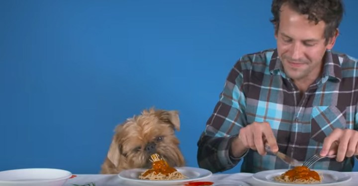Dogs and Their Owners Have a Dinner Date and It's Too Cute.