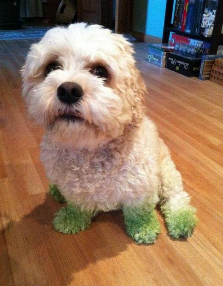 20 Things Dog Owners Will Understand - Even if it means grass stains.