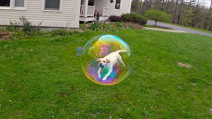 28 Perfectly Timed Photos of People Having a Bad Day - How did this dog get stuck in a bubble?