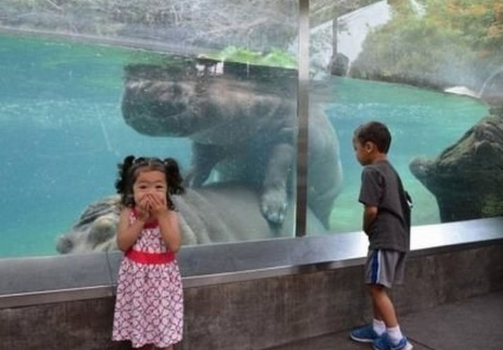 28 Perfectly Timed Photos of People Having a Bad Day - So much for a day of good clean fun at the zoo.