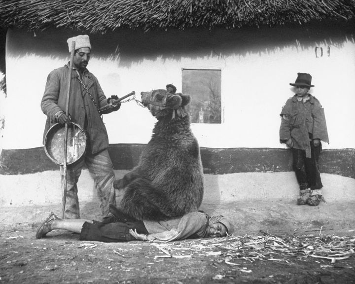 35 Rare Historical Photos - 1946: Home remedy for healing rheumatism in Romania by having bear sit on you.
