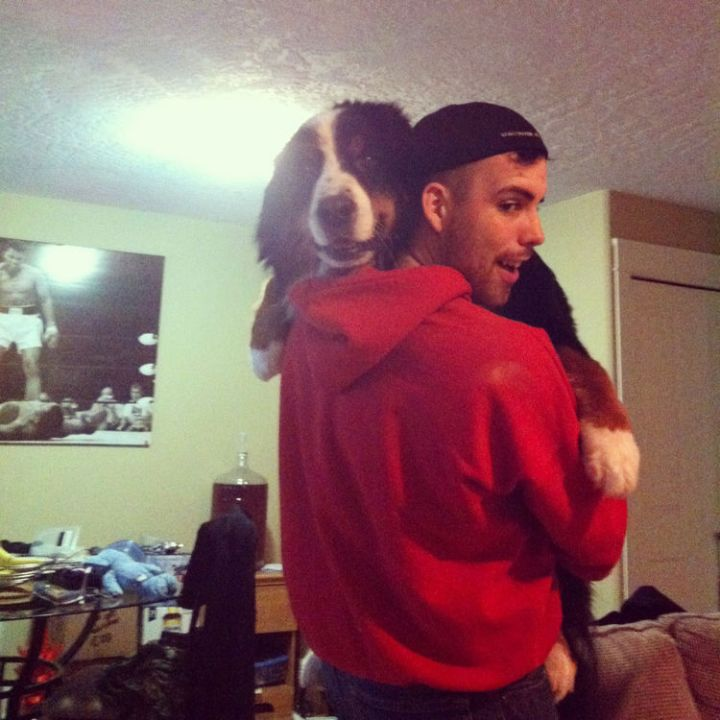 12 Huge Dogs That Still Think They Are Puppies - Look at that huge smile :)