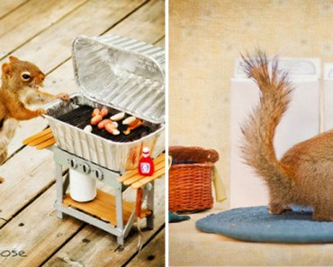 Woman Captures Incredible Backyard Moments With Squirrels.