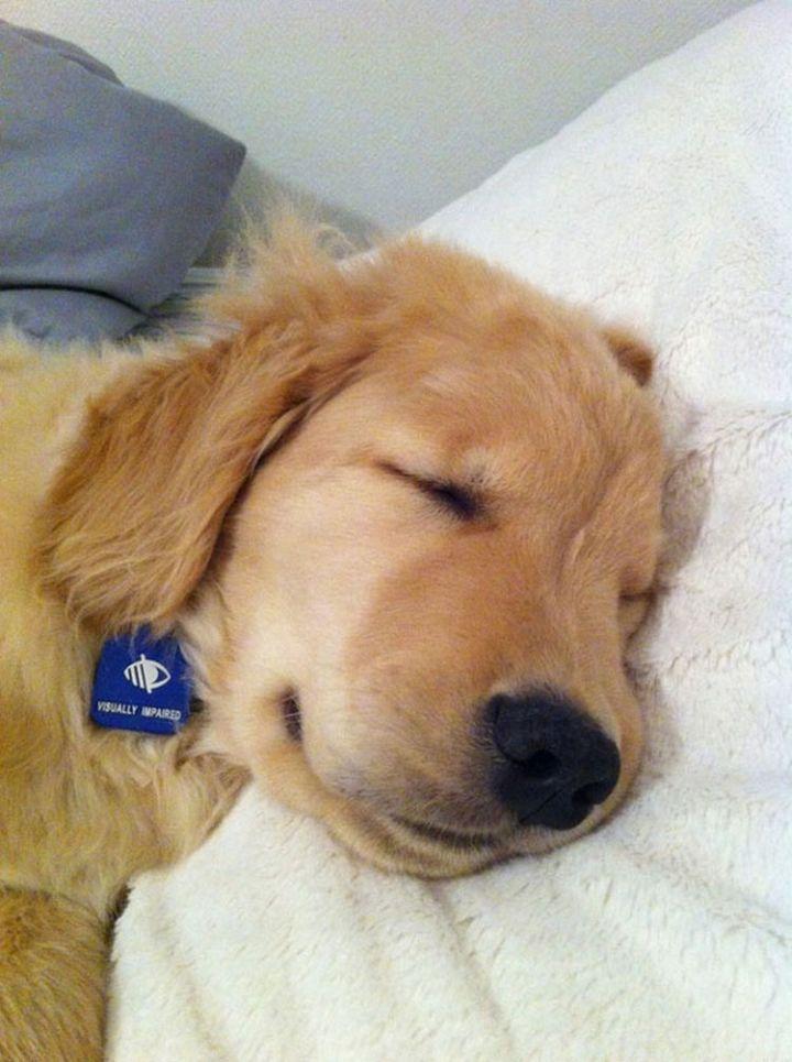 He wants to take a nap.