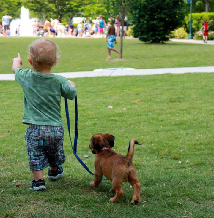 14 Dogs and Babies - A tiny walk in the park.