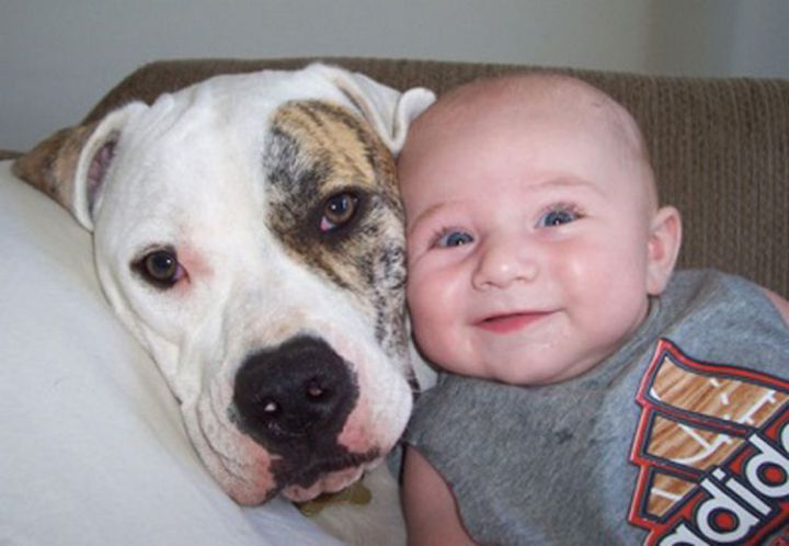 14 Dogs and Babies - Two smiling faces.