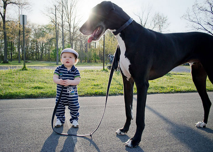 33 Adorable Photos of Dogs and Babies - A little boy and his best friend.